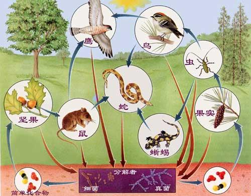生物链指的是:由动物,植物和微生物互相提供食物
