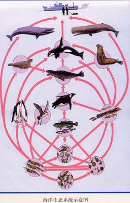 图5:海洋生态系统示意图