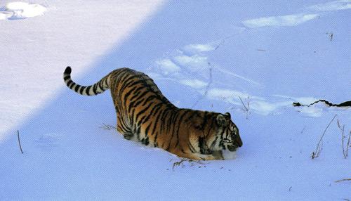 国家一级保护动物