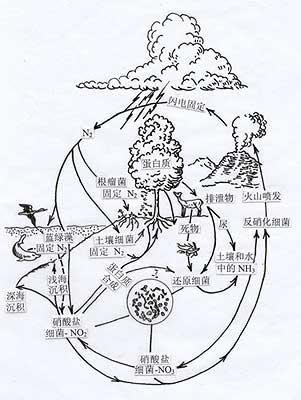 生态系统氮循环示意图