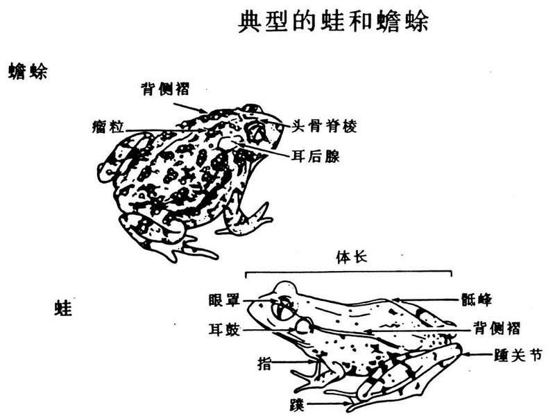 卵生动物的生长过程示意图