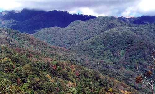贡山亚热带长绿阔叶林