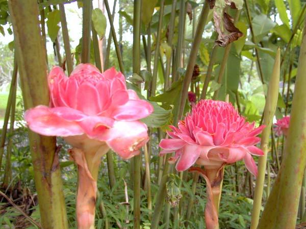 西双版纳热带植物园_中国科普博览