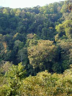 何谓热带雨林