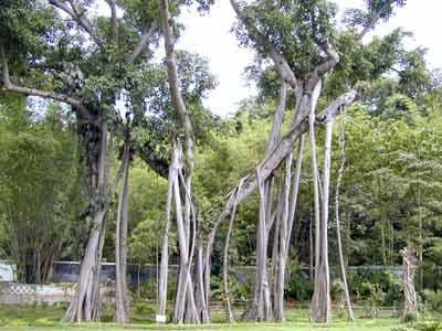 西双版纳热带植物园 中国科普博览
