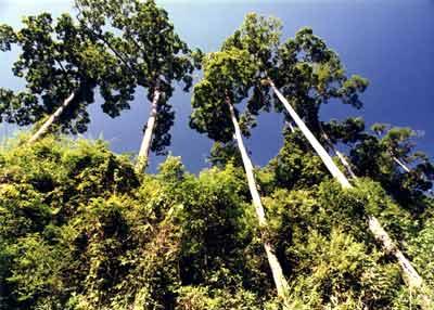 北美名贵树木图片及名称