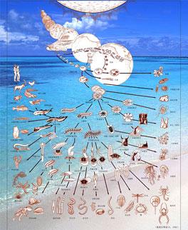 单细胞动物(原生动物) → 多细胞动物(海绵,腔肠动物及之后的动物).