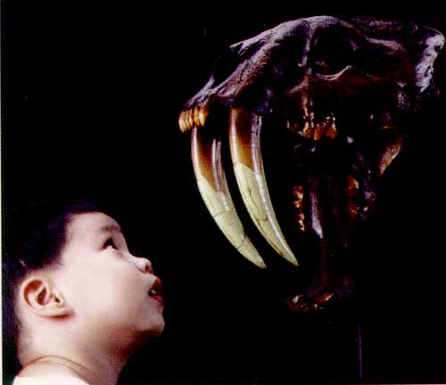 和恐龙一样古老 > 哺乳动物不比恐龙年轻