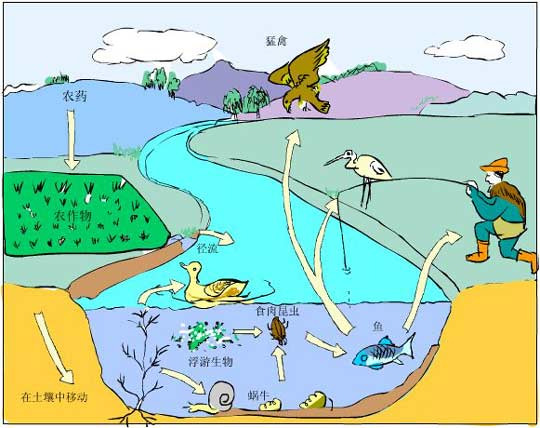 水体生态系统结构图