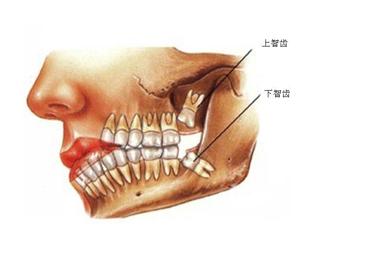 Dental Hygienist yale college blue book