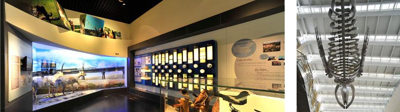 根据中国科学院知识创新工程的规划和国家实施生态文明建设,加强生态环境宣传和教育的需要,1999年在时任国务院副总理的李岚清同志的倡导和关心下,国家投入经费,经过近十年的努力建成了依托于中国科学院动物研究所的国家动物博物馆。该馆集动物标本收藏与展示、科普知识宣传与教育、生物多样性描述与编目为一体,是一个代表国家水平的专业博物馆。   国家动物博物馆展示馆凝聚了我国几代动物学研究的科学家的心血和集体智慧。总建筑面积7300平方米,其中展览面积5500平方米,共分为三层,建筑格局仿法国自然历史博物馆。具有