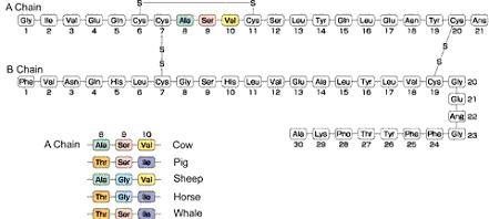 利用x衍射法观察猪胰岛素晶体,发现胰岛素分子中