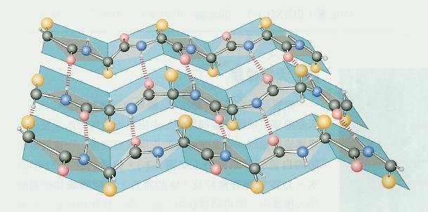 角蛋白的空间结构有&