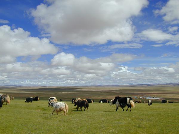 青藏铁路沿线的自然景观呈现多样性和独特性。既有高寒灌丛、高寒草甸、高寒草原、高寒荒漠组成的水平高寒生态景观,又有高寒草甸、高寒草原、冰雪带等组成的垂直高寒生态景观;既有可可西里和三江源地区有蹄类野生动物的栖息和迁徙环境,又有西藏境内广布的沼泽湿地和鸟类的栖息环境。除此以外,还有昆仑山、唐古拉山、念青唐古拉山的神秘雪峰和冰川;多年冻土区的冻胀丘、冰锥、热融湖塘等冻土奇观;古老的长江源头一一楚玛尔河、沱沱河、布曲;美丽的高原湖泊一一错那湖;羊八井的峡谷;藏北的草原风光和民族风情等等。